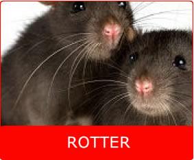 Rottespærer til kloak